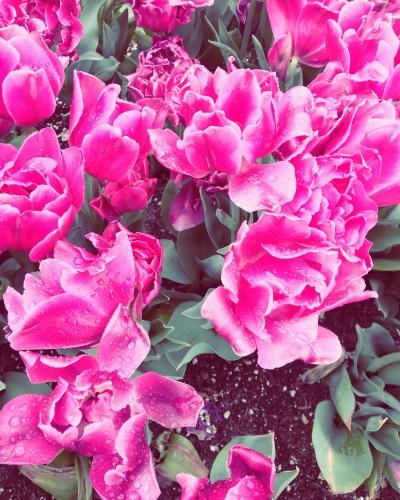 Lauren Hurst - Lauren Hurst - Photographer in New York City on Romio.com