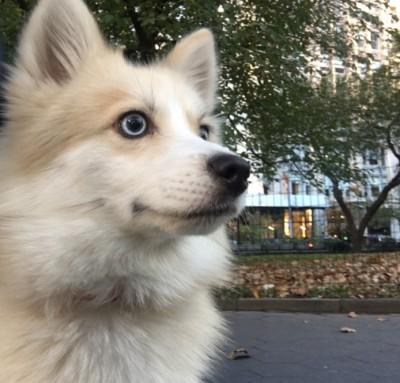 Cynthia Okimoto - Cynthia Okimoto - Pet Sitter in New York City on Romio.com