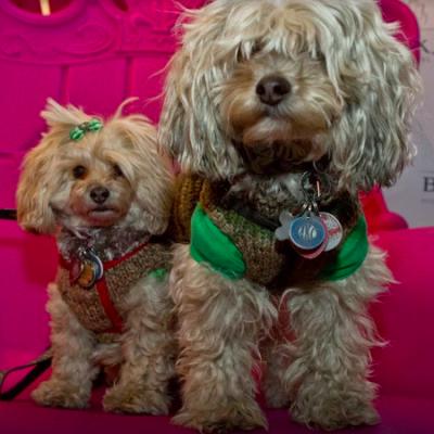 Jennifer-jo Moyer - Jennifer-jo Moyer - Pet Service expert in New York City on Romio.com
