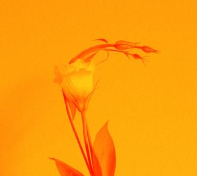 Vanessa Granda - Vanessa Granda - Photographer in New York City on Romio.com