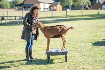Frania Shelley-Grielen - Frania Shelley-Grielen - Pet Trainer in New York City on Romio.com