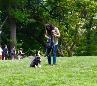Amanda Gagnon - Amanda Gagnon - Pet Trainer in New York City on Romio.com