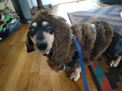 Farrah I. Miller - Farrah I. Miller - Dog Walker in New York City on Romio.com