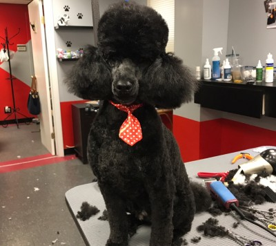 Paws On Fifth - Paws On Fifth - Pet Groomer in New York City on Romio.com
