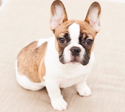 Lexi Beermann - Lexi Beermann - Pet Trainer in New York City on Romio.com