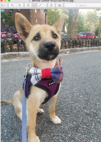 Mariko Miyake - Mariko Miyake - Dog Walker in New York City on Romio.com