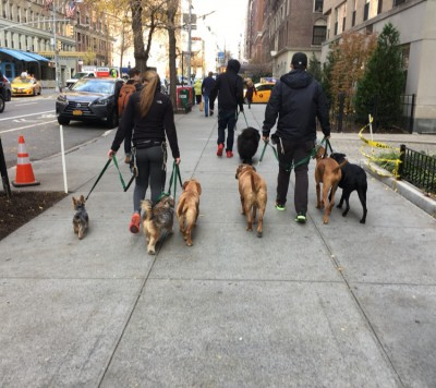 Rusty Lamb - Rusty Lamb - Dog Walker in New York City on Romio.com