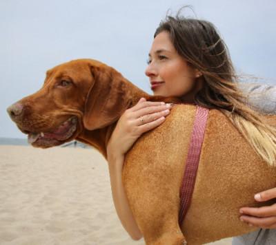 Denise Mange - Denise Mange - Pet Trainer in New York City on Romio.com