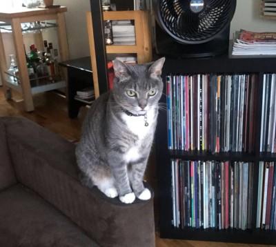 Shayba Douglas - Shayba Douglas - Pet Sitter in New York City on Romio.com