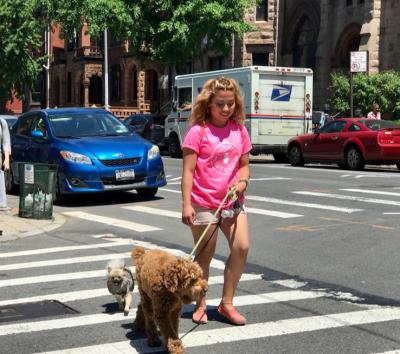 Gabriel Riesco - Gabriel Riesco - Dog Walker in New York City on Romio.com