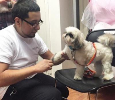 Hugo Mendez - Hugo Mendez - Pet Groomer in New York City on Romio.com