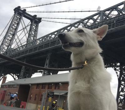 Maya  - Maya  - Dog Walker in New York City on Romio.com