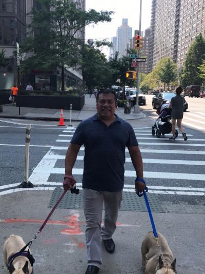 Alfredo Hernandez - Alfredo Hernandez - Dog Walker user in New York City on Romio.com