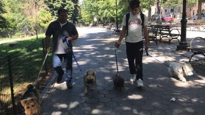 Alfredo Hernandez - Alfredo Hernandez - Dog Walker in New York City on Romio.com