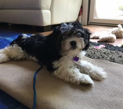 Sarah Hodgson - Sarah Hodgson - Pet Trainer in New York City on Romio.com