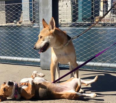 Dianna  - Dianna  - Pet Trainer in New York City on Romio.com