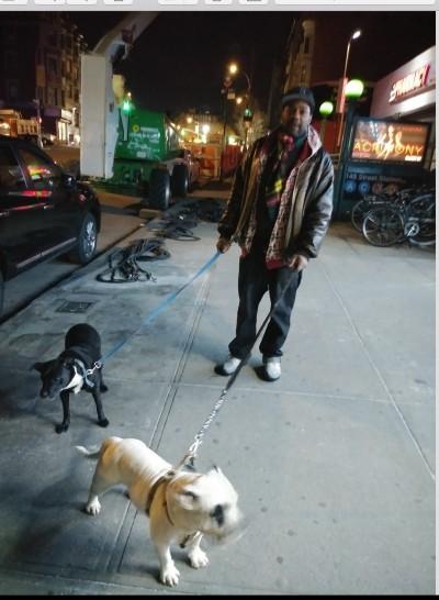 Nicholas Veal - Nicholas Veal - Dog Walker in New York City on Romio.com