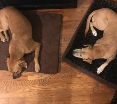 Arianne Dog Walker - Arianne Dog Walker - Dog Walker in New York City on Romio.com