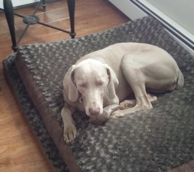Ben Andujar - Ben Andujar - Pet Trainer in New York City on Romio.com