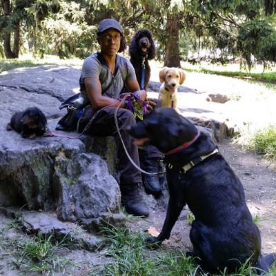 Logan Grendel - Logan Grendel - Dog Walker user in New York City on Romio.com