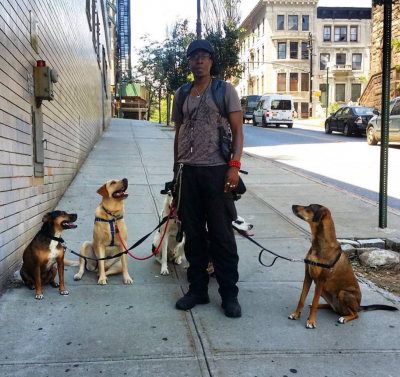 Logan Grendel - Logan Grendel - Dog Walker in New York City on Romio.com