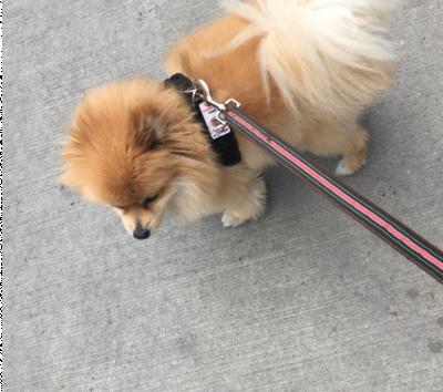 A-List Pet Sitting, LLC Roe - A-List Pet Sitting, LLC Roe - Dog Walker in New York City on Romio.com